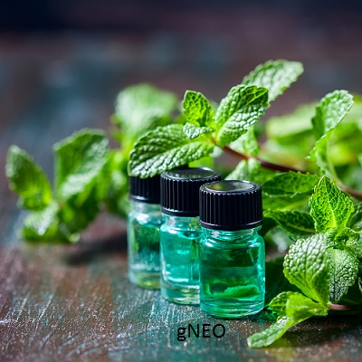 Organic Rectified Peppermint Essential Oil