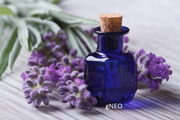 Organic Spike Lavender Essential Oil