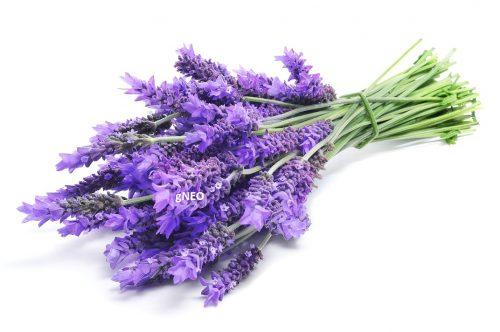 Bulgarian Organic Lavender Essential oil