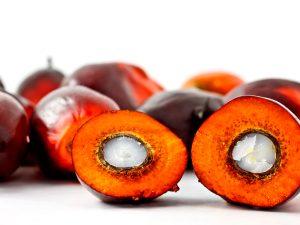 Palm kernel oil RBD